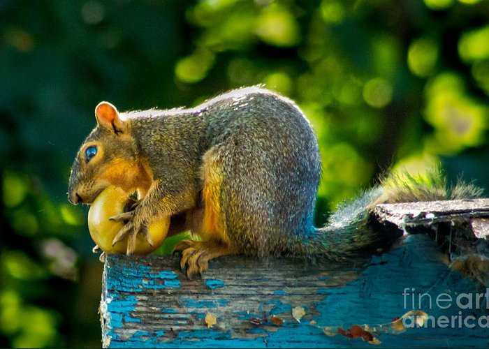 Squirrel Greeting Card featuring the photograph Big Apple by Robert Bales