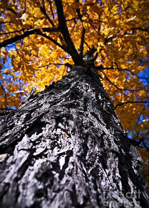 Autumn Greeting Card featuring the photograph Big Autumn Tree In Fall Park by Elena Elisseeva
