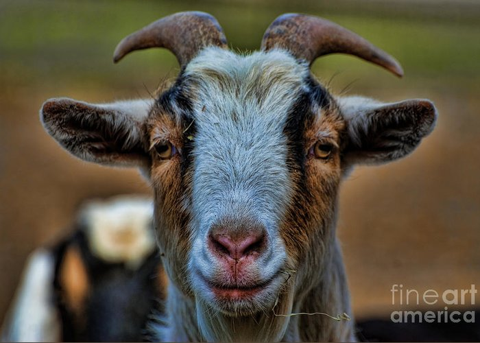 Goat Greeting Card featuring the photograph Billy Goat by Paul Ward
