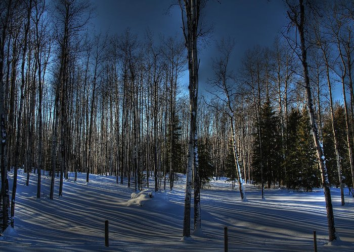 Birch Greeting Card featuring the photograph Birch Shadows by Kim French