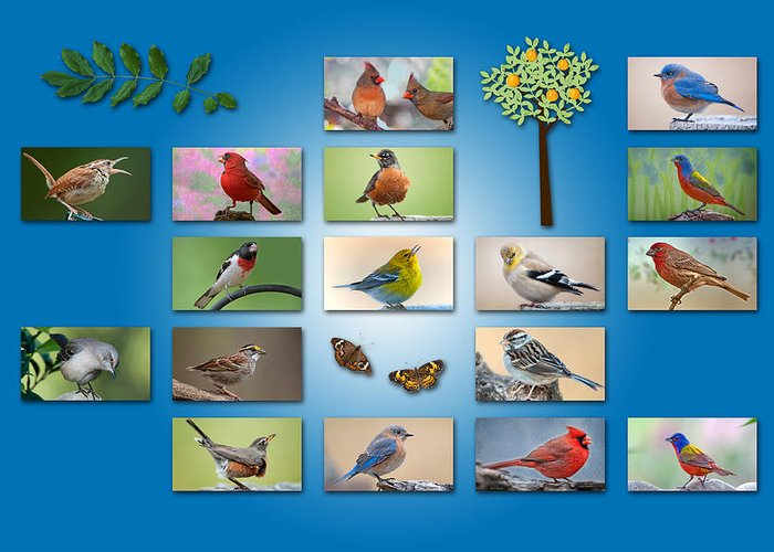 Songbirds Greeting Card featuring the photograph Birds Of The Neighborhood by Bonnie Barry