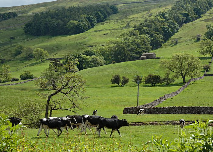 Bishopdale Greeting Card featuring the photograph Bishopdale In The Yorkshire Dales National Park by Louise Heusinkveld