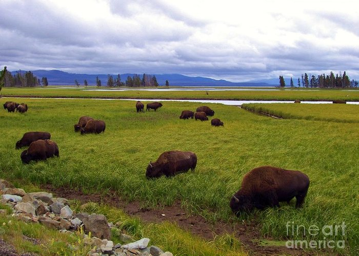 Bison Greeting Card featuring the photograph Bison-land by Madeline Schneider