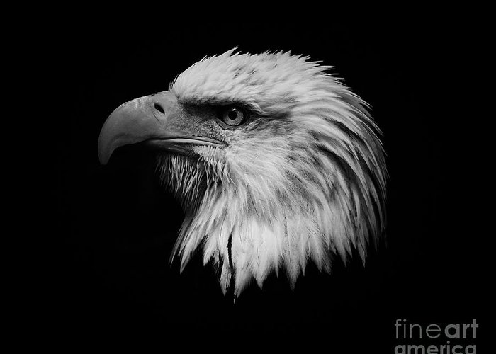 Black And White Greeting Card featuring the photograph Black And White Eagle by Steve McKinzie