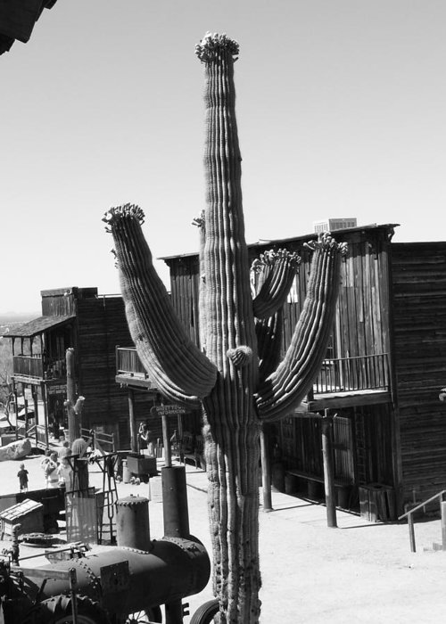 Desert Greeting Card featuring the photograph Black And White Ghost Town With Saguaro by Kat Loveland