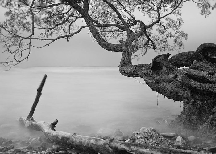 Tree Greeting Card featuring the photograph Black And White Mystic Lake by Andre Distel