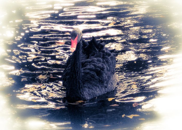 Swan Greeting Card featuring the photograph Black Beauty II by Tracy Salava
