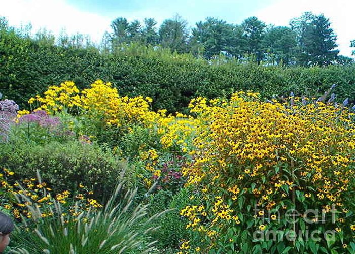 Flowers Greeting Card featuring the photograph Black Eyed Susans by Terry Hunt