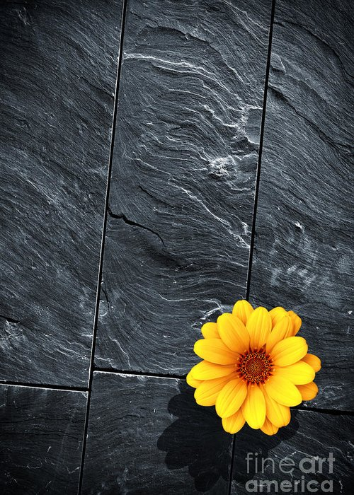 Abstract Greeting Card featuring the photograph Black Schist Flower by Carlos Caetano