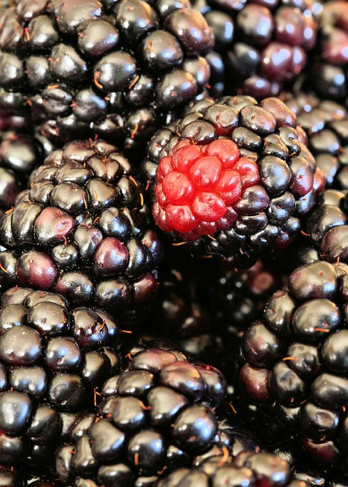 Blackberry Greeting Card featuring the photograph Blackberries by JC Findley