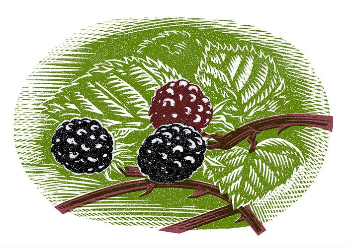 Rubus Greeting Card featuring the photograph Blackberries, Woodcut by Gary Hincks