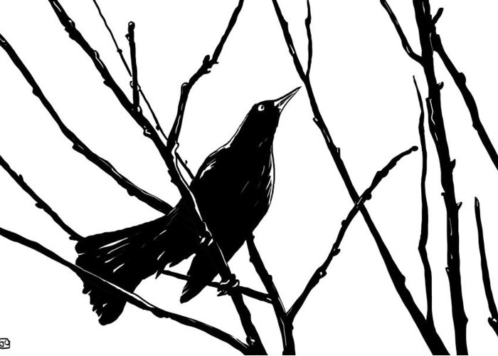 Blackbird Greeting Cards