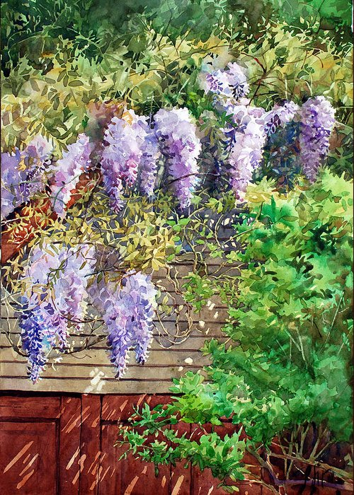 Peter Sit Watercolor Greeting Card featuring the painting Blooming Wisteria by Peter Sit