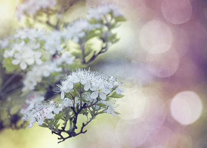 Texture Spring Blossom Bokeh Bloom White Green Blue Nature Greeting Card featuring the mixed media Blossom by Joel Olives