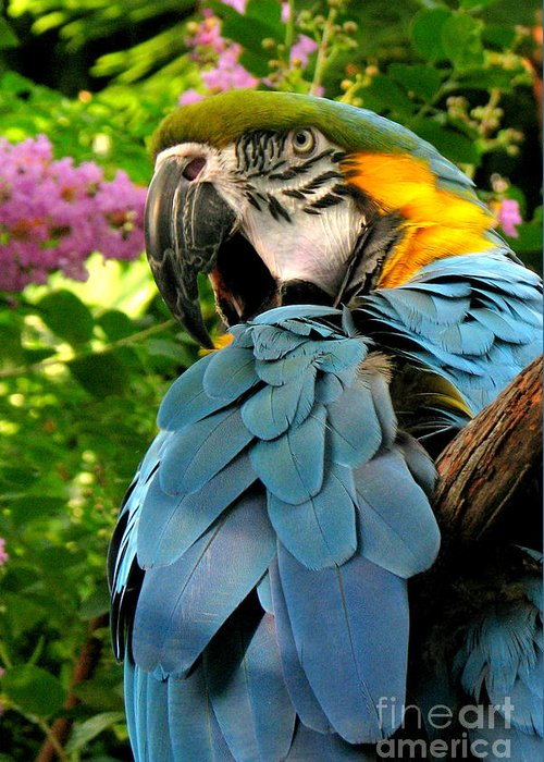 Macaw Greeting Card featuring the photograph Blue And Gold Macaw by Frank Townsley