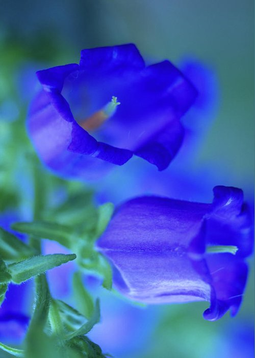 Flower Greeting Card featuring the photograph Blue Bell Flowers by Kathy Yates