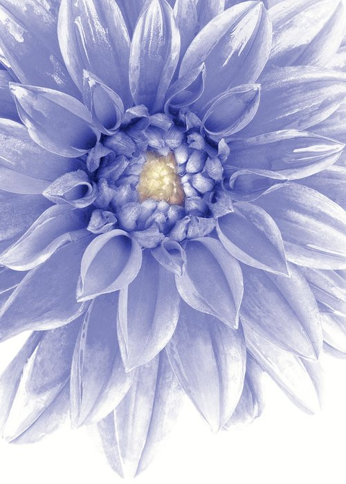 Annual Greeting Card featuring the photograph Blue Dahlia by Al Hurley