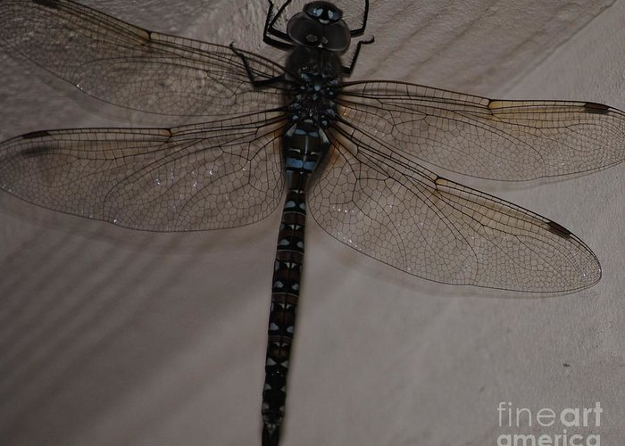 Dragonfly Greeting Card featuring the photograph Blue Dragonfly by Paulina Roybal