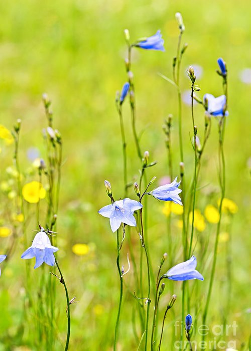 Flowers Greeting Card featuring the photograph Blue Harebells Wildflowers by Elena Elisseeva