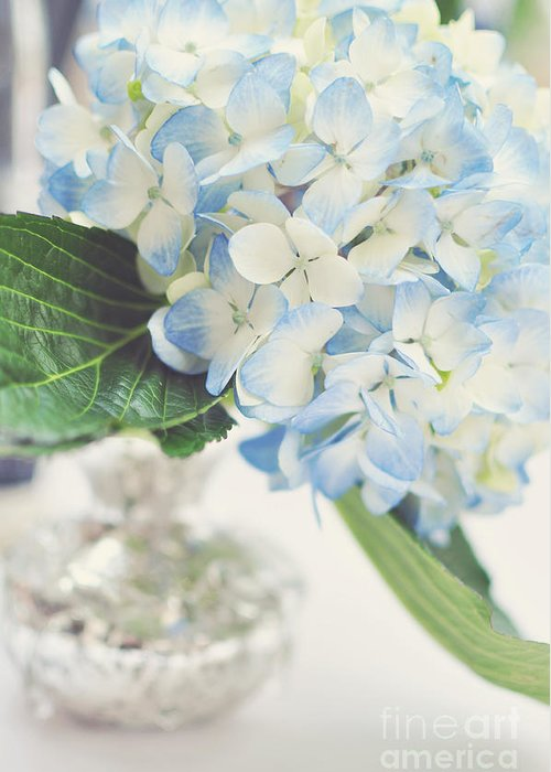 Photograph Greeting Card featuring the photograph Blue Hydrangea by Tamara Adams