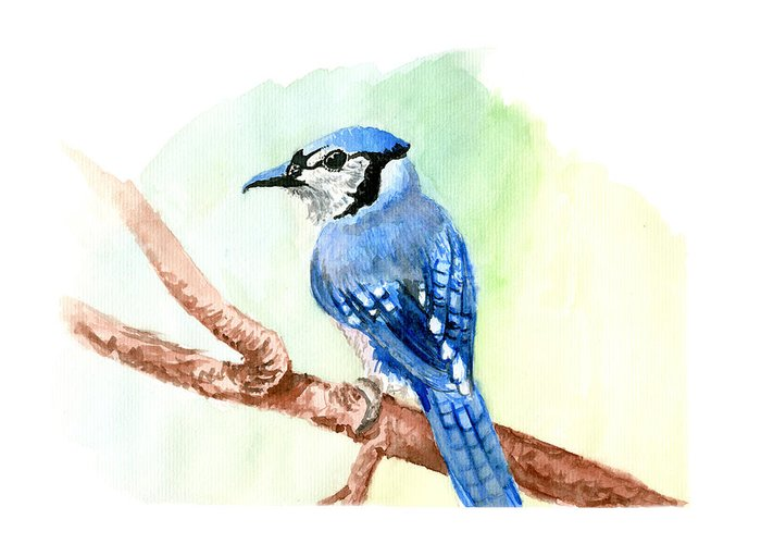 Blue Greeting Card featuring the painting Blue Jay by Kyle Gray
