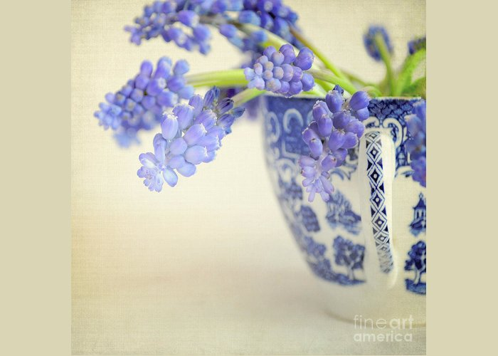 Muscari Greeting Card featuring the photograph Blue Muscari Flowers In Blue And White China Cup by Lyn Randle