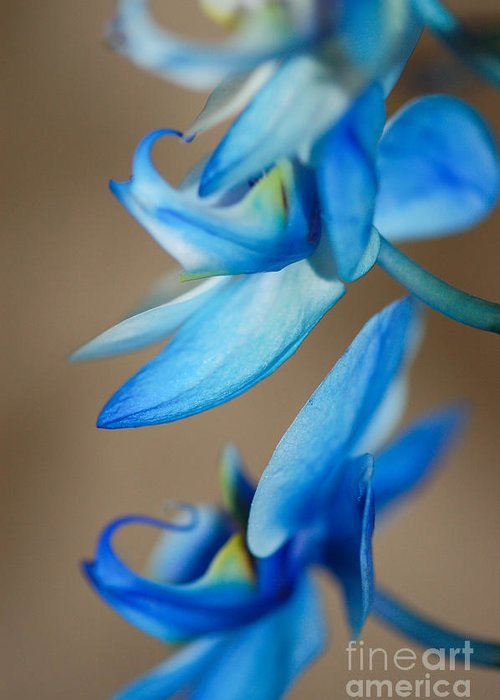 Landscape Greeting Card featuring the photograph Blue Orchid by Melissa Haley