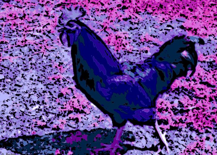 Rooster Greeting Card featuring the photograph Blue Rooster by George Pedro
