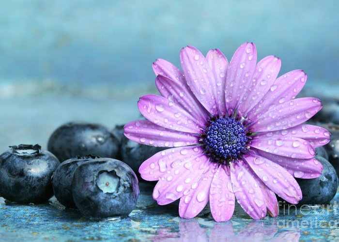 Agriculture Greeting Card featuring the photograph Blueberries And Daisy by Sandra Cunningham