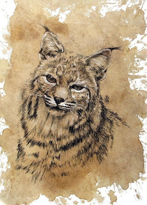 Western Wildlife Greeting Card featuring the drawing Bobcat by Debra Jones
