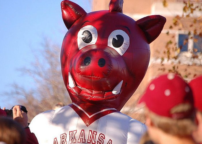 Arkansas Greeting Card featuring the photograph Boss Hog by Amy Glover Bryant