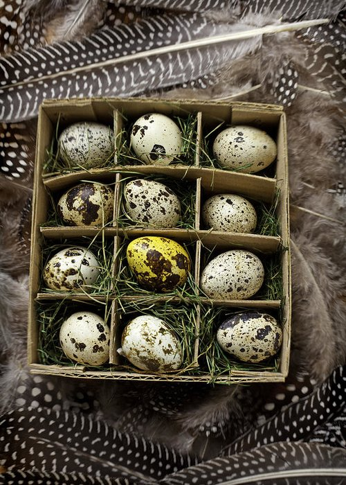 Bird Greeting Card featuring the photograph Box Of Quail Eggs by Garry Gay