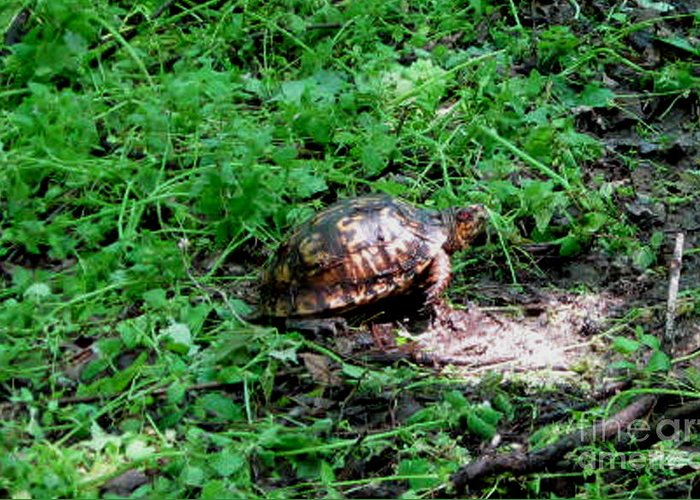 Turtle Greeting Card featuring the photograph Box Turtle by The Kepharts