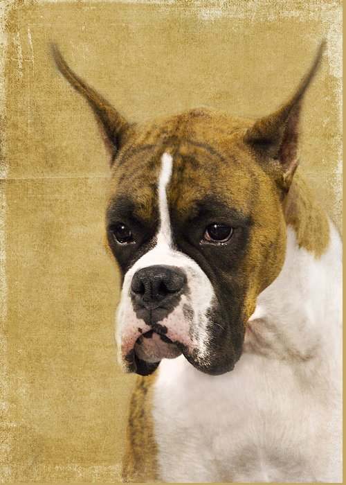 Boxer Greeting Card featuring the photograph Boxer by Rebecca Cozart