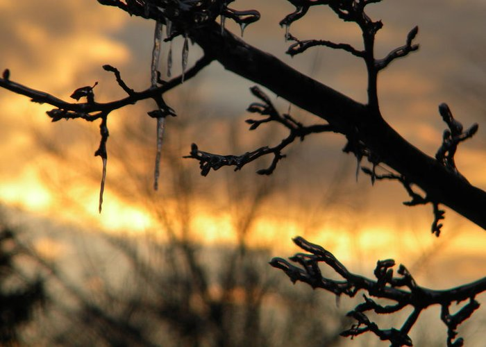 Sunset Greeting Card featuring the photograph Branches in January by Helen ONeal