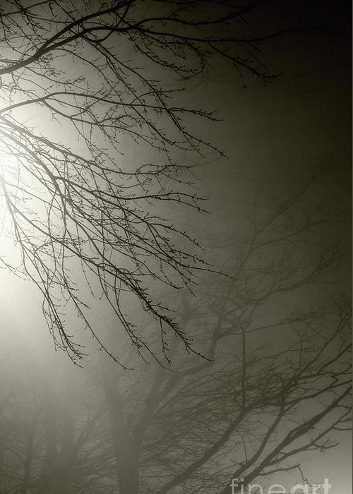 Trees Greeting Card featuring the photograph Branches In The Fog by Susan Isakson