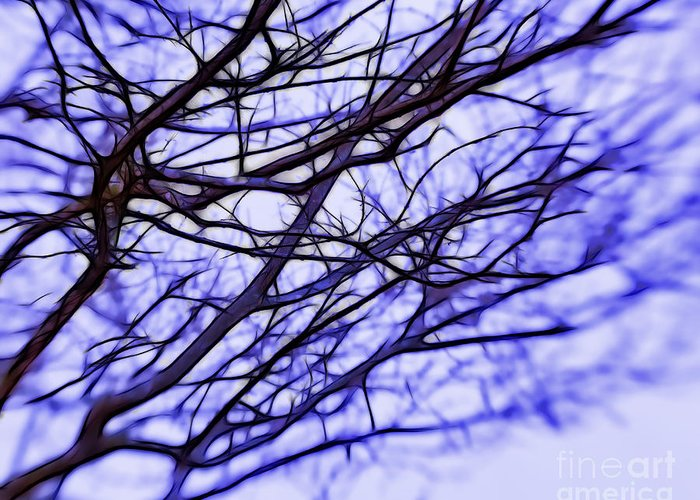 Branches Greeting Card featuring the photograph Branches In Winter by Judi Bagwell