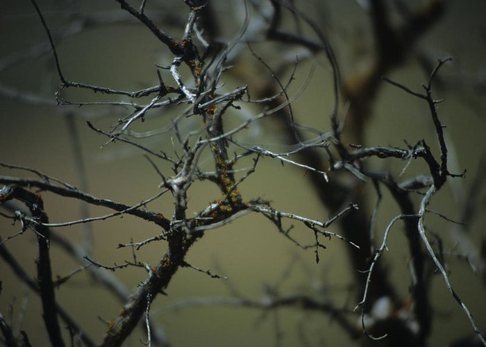 Branches Greeting Card featuring the photograph Branches by One Rude Dawg Orcutt