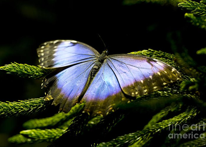 Butterfly Greeting Card featuring the photograph Bright Blue by Leslie Leda
