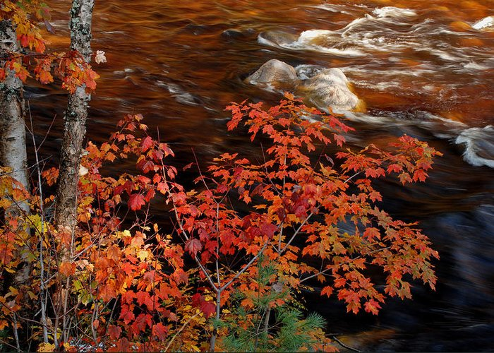 Fall Greeting Card featuring the photograph Bright Leaves At Swift River by Nancy De Flon