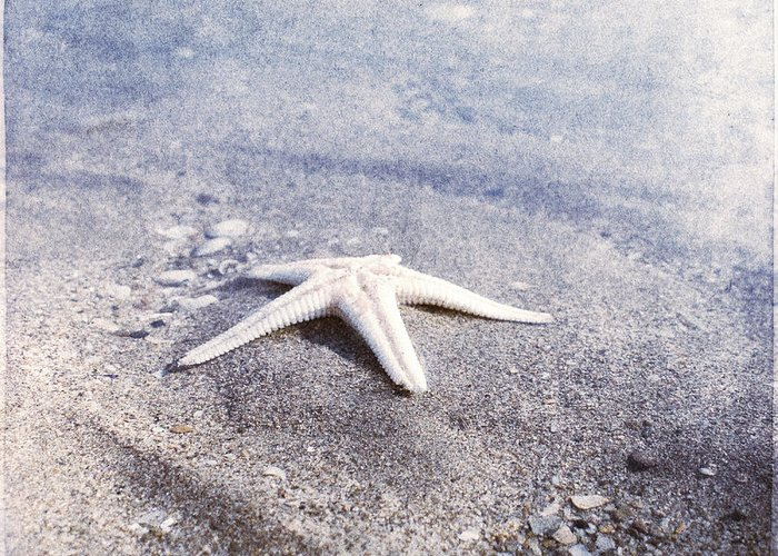 Bright Star Fish Beach Shore Sand Pebble Greeting Card featuring the photograph Bright Star by Paul Grand