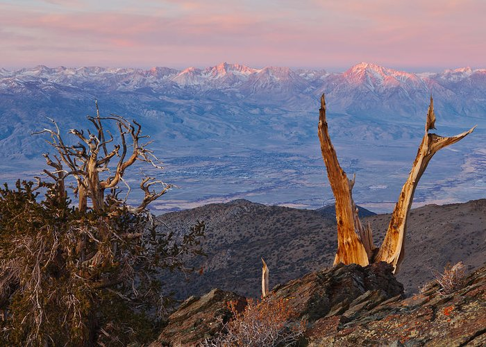 Sierra Greeting Card featuring the photograph Bristlecone Bishop Sunrise by Nolan Nitschke