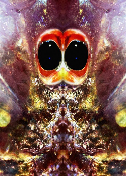 Abstract Greeting Card featuring the photograph Bug Eyes by Skip Nall