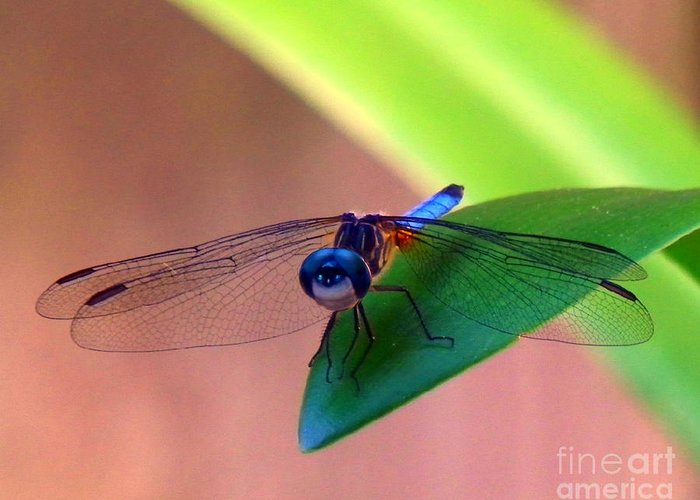Dragonfly Greeting Card featuring the photograph Bugeyed by Nanci Fielder