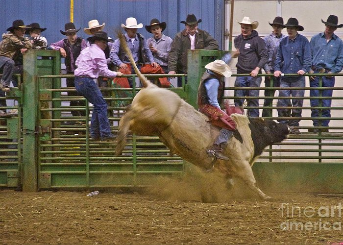 Photography Greeting Card featuring the photograph Bull Rider 2 by Sean Griffin