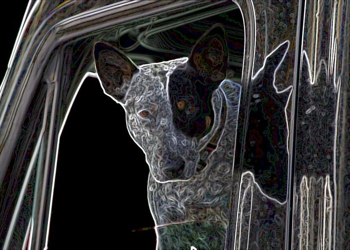 Bull Terrier Greeting Card featuring the photograph Bull Terrier by One Rude Dawg Orcutt