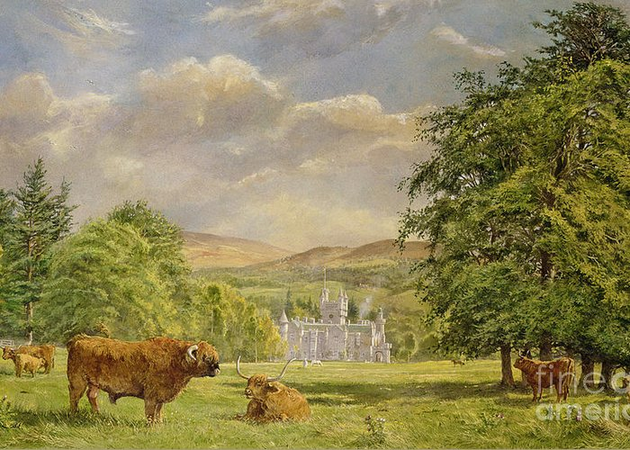 Landscape; Highland Cattle; Angus; Cow; Royal Residence;scottish Baronial; Horn; Horns Park; Bulls; Bull; Balmoral Castle; Balmoral; Hill; Hills; Tree; Trees; Grass; Green; Scottish Greeting Card featuring the painting Bulls At Balmoral by Tim Scott Bolton