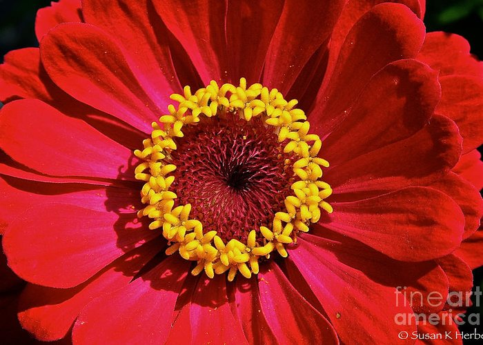 Outdoors Greeting Card featuring the photograph Bullseye by Susan Herber