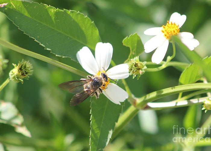 Bumble Bee Greeting Card featuring the photograph Bumble Bee 1 by Michelle Powell