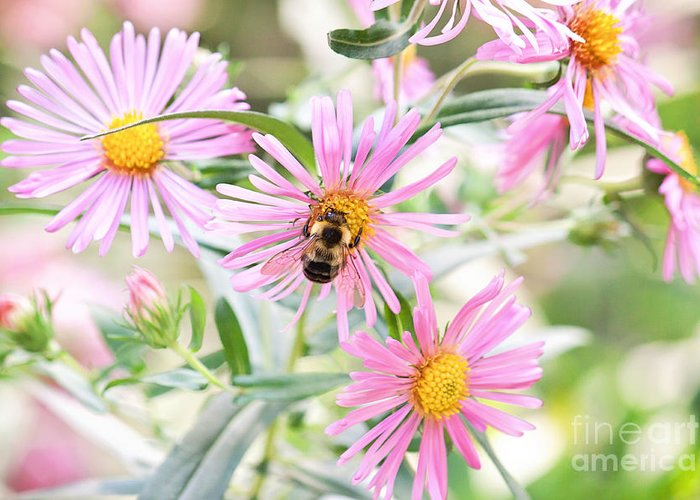 Bumble Greeting Card featuring the photograph Bumble Bee On Asters by Lena Auxier